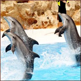 日本で唯一イルカのトレーナーコースがある香川県の高校とはどこ?
