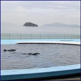 四国水族館 テーマの四国水景とは?次世代水族館の特色も紹介!
