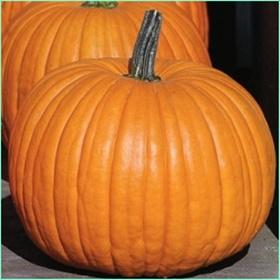 ハロウィンがオレンジ色のかぼちゃである理由は?種類なども解説!